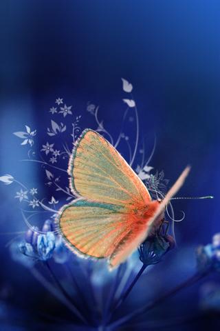 Butterfly iphone wallpaper